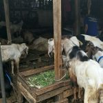 Imbauan Kapolda Jateng, Di Rumah Saja Saat Libur Idul Adha